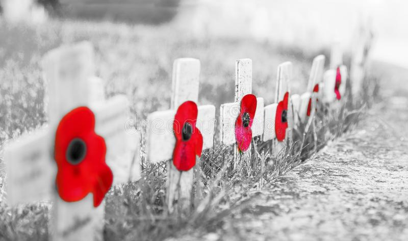 ЗЕРНИСТОЕ черно-белое С КРАСНЫМИ МАКАМИ - маками день памяти погибших в первую и вторую мировые войны на деревянных крестах, на м стоковые изображения
