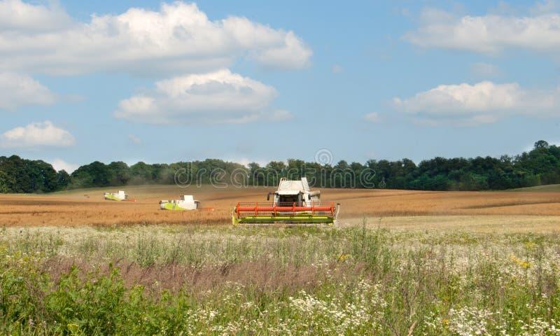Зернокомбайны зеленого цвета стоковое фото rf