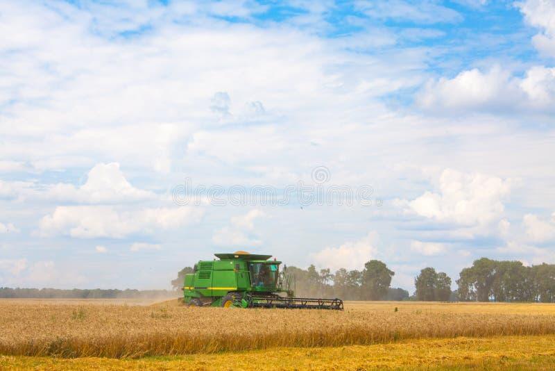 Зернокомбайн жать заводы пшеницы в поле стоковые изображения rf