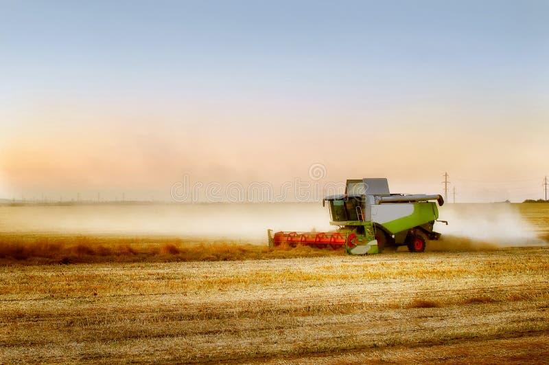 Зернокомбайн жать рапс стоковые изображения