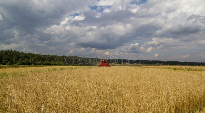Зернокомбайн жмет зерно в поле, после этого стоковая фотография rf