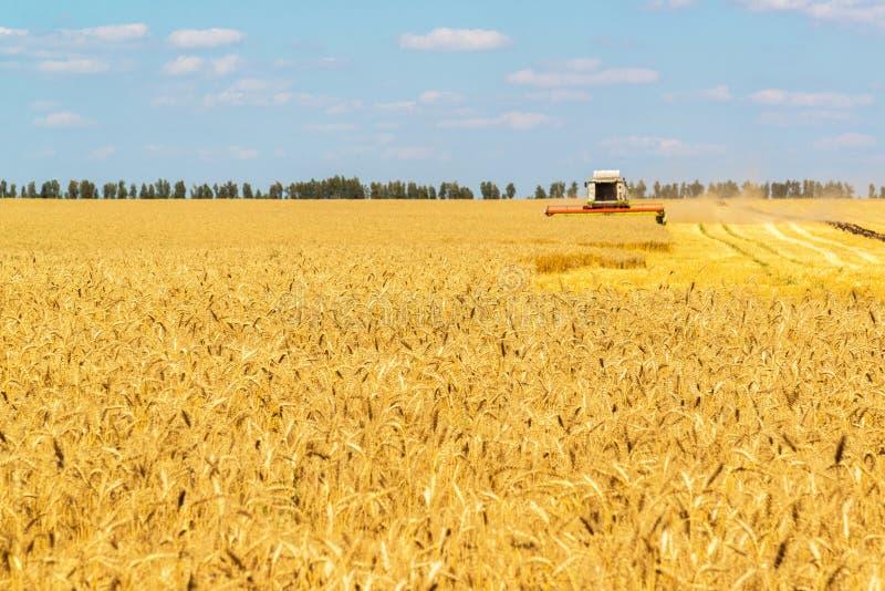 Зернокомбайн работает на большом поле зрелой пшеницы Россия стоковое изображение