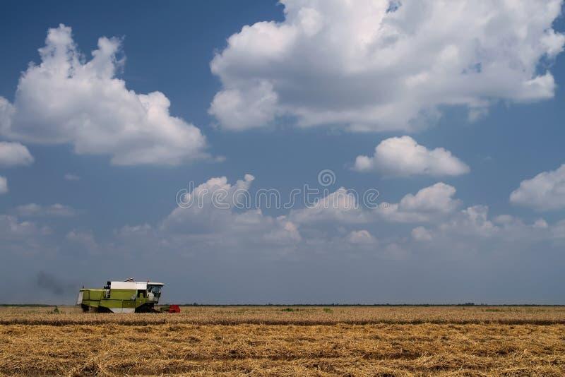 зернокомбайн harversting стоковое фото