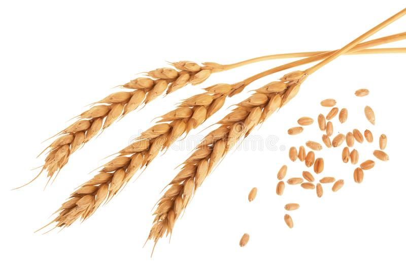 Зерно и уши пшеницы изолированные на белой предпосылке Взгляд сверху стоковая фотография rf