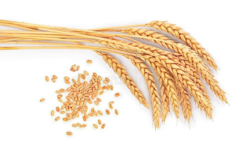 Зерно и уши пшеницы изолированные на белой предпосылке Взгляд сверху стоковое изображение