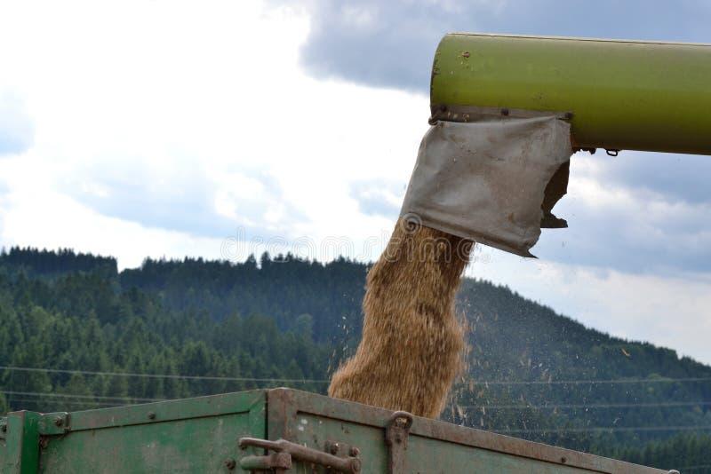 Зерно нагружается стоковая фотография rf