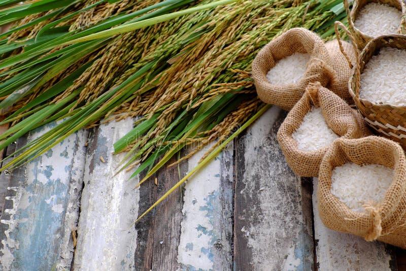 Зерно падиа и семя риса стоковое фото rf