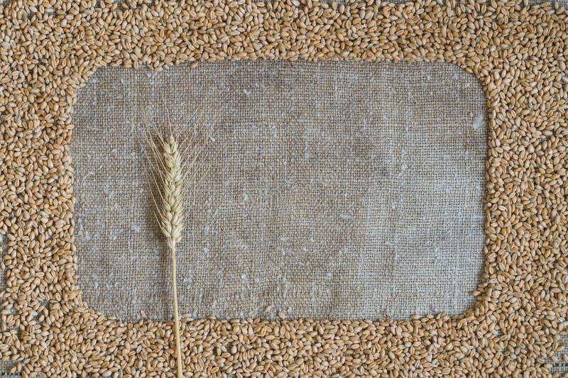Зерно пшеницы в форме рамки на мешковине стоковая фотография rf