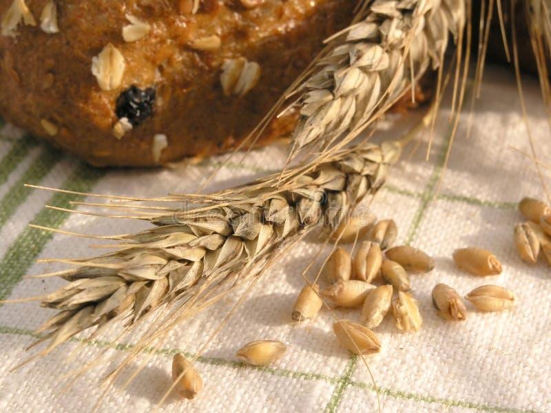 зерно уха стоковое изображение rf