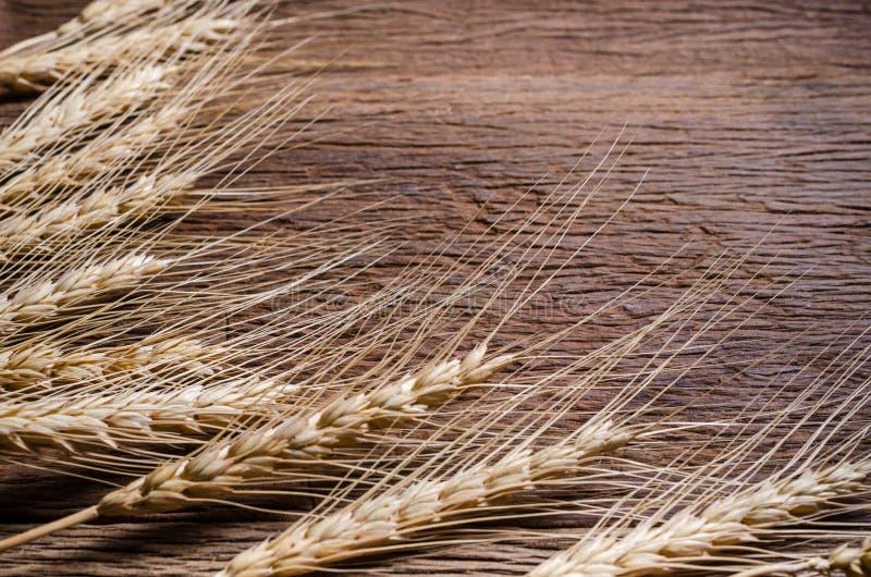 Зерно ячменя на деревянном столе стоковое фото