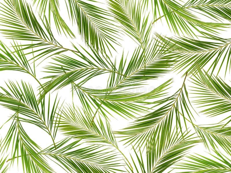 Зеленая ладонь разветвляет предпосылка стоковое фото