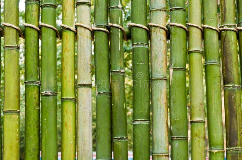 Download Зеленая бамбуковая предпосылка загородки Стоковое Изображение - изображение насчитывающей backhoe, трубы: 37925211