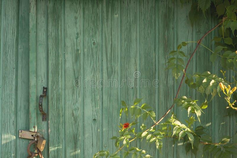 Зеленая дверь стоковое фото