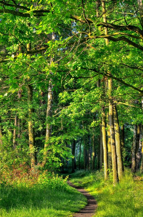 зеленая весна ландшафта стоковые фото