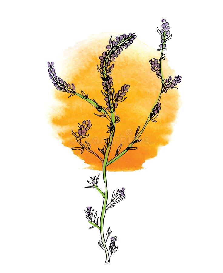 Зеленая ветвь завода с цветками и солнцем, вектором иллюстрация штока