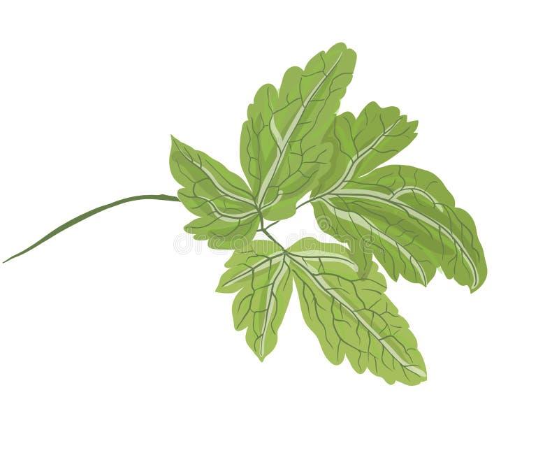 Зеленая ветвь завода бесплатная иллюстрация