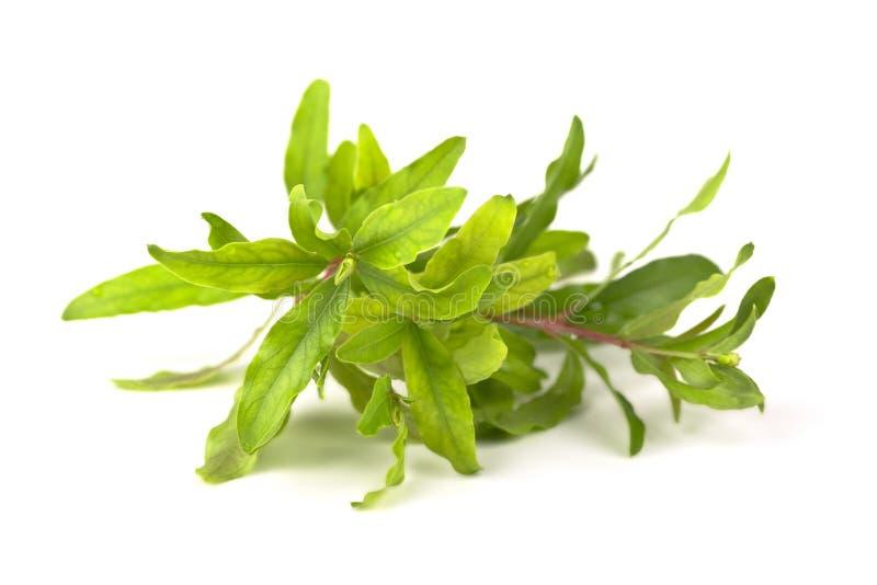 Зеленая ветвь. стоковая фотография rf