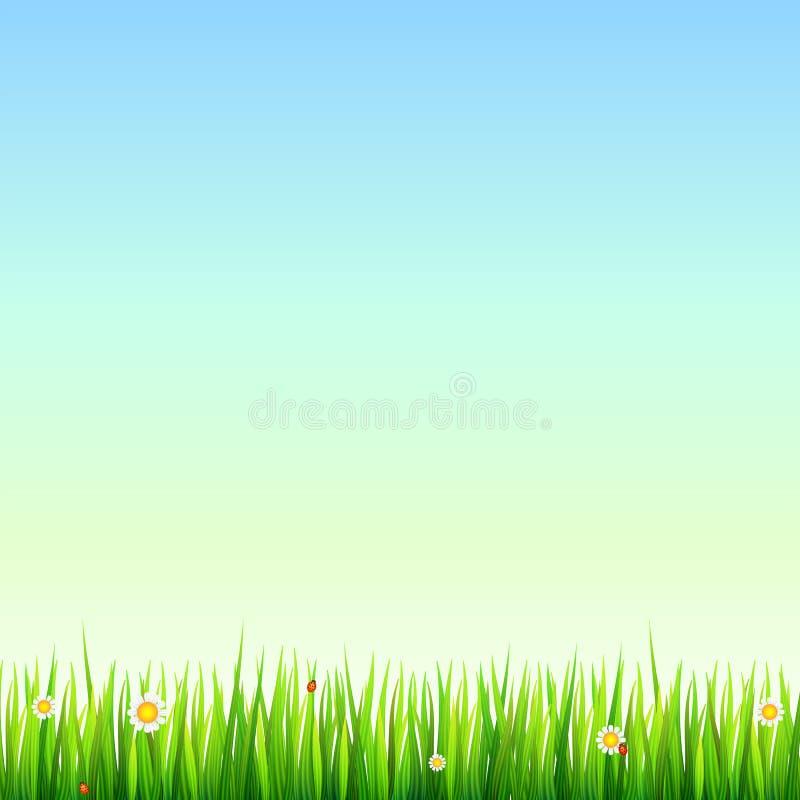 Зеленая, естественная граница травы с белыми маргаритками, цветок стоцвета и малый красный ladybug Шаблон для вашего дизайна или иллюстрация штока