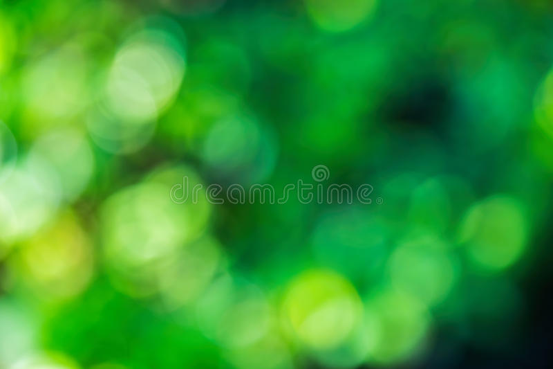 Зеленая естественная предпосылка из леса или bokeh фокуса стоковое изображение rf