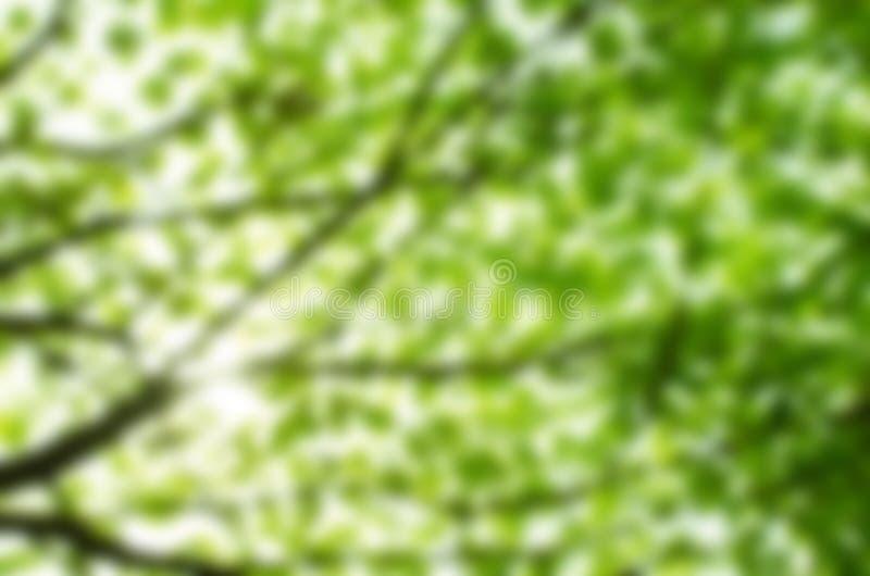 Зеленая естественная предпосылка из леса фокуса стоковые фотографии rf
