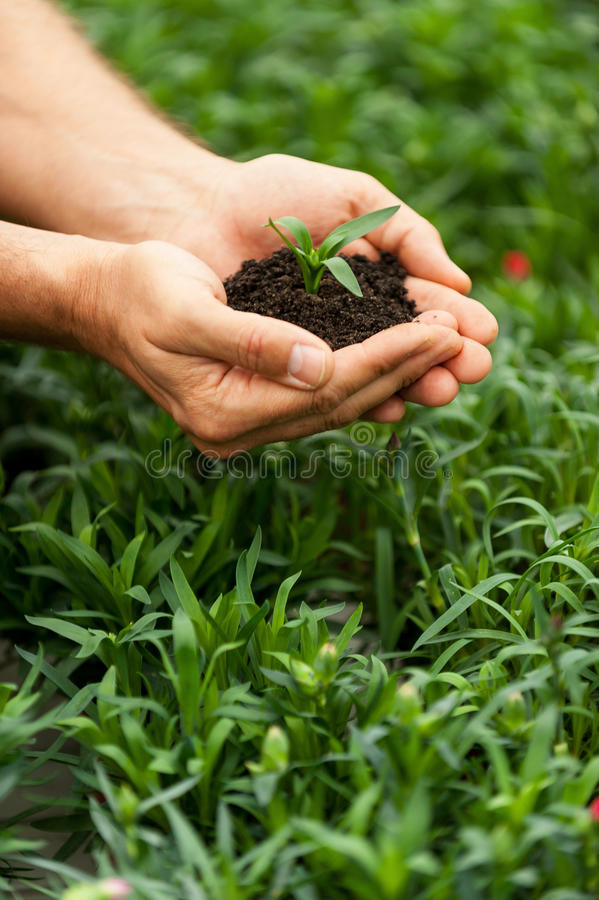 Download зеленая жизнь новая стоковое фото. изображение насчитывающей грязь - 40586418
