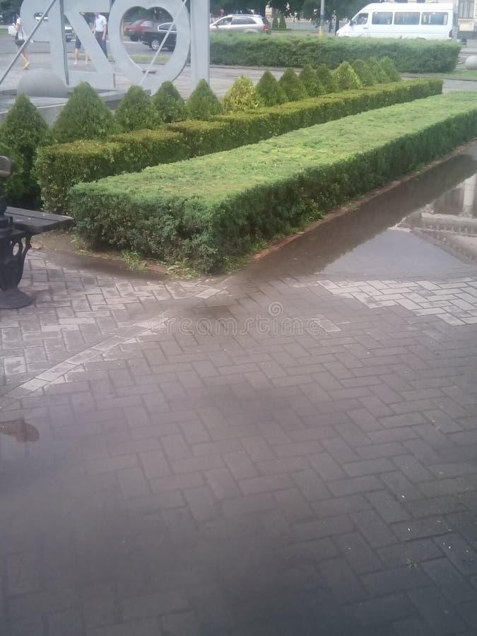 Зеленая загородка стоковое фото rf