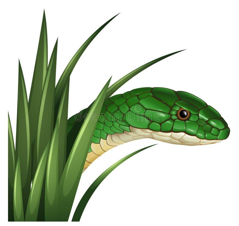 Зеленая змейка за травой бесплатная иллюстрация