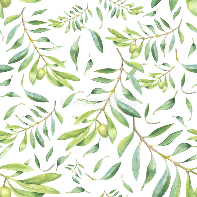 Зеленая оливковая ветка акварели бесплатная иллюстрация