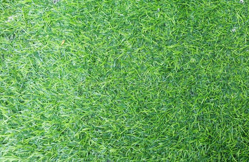 Зеленая поверхность предпосылки травы, зеленых обоев sward стоковая фотография rf