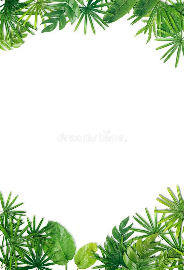 Зеленая предпосылка границы лист стоковое фото