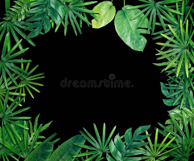 Зеленая предпосылка границы лист стоковые изображения rf