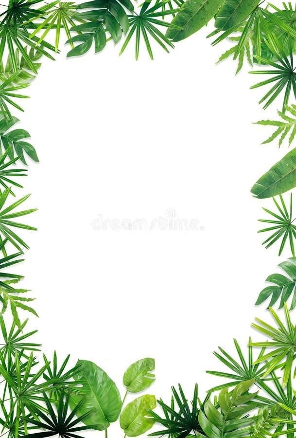 Зеленая предпосылка границы лист стоковые фотографии rf