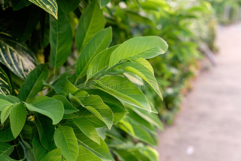 Зеленая предпосылка лист стоковые фото