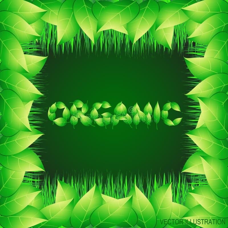 Зеленая предпосылка с текстом сделанным от листьев органическим Иллюстрация с вегетативной границей трав также вектор иллюстрации иллюстрация вектора