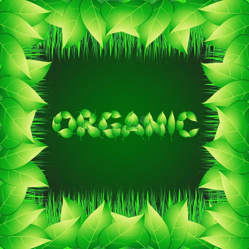 Зеленая предпосылка с текстом сделанным от листьев органическим Иллюстрация с вегетативными травами и орнаментальной границей иллюстрация штока