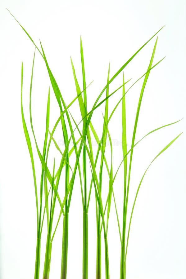 зеленая природа листьев стоковые фотографии rf