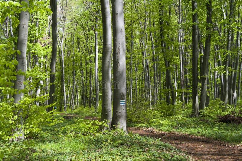 Download Зеленая пуща стоковое изображение. изображение насчитывающей ландшафт - 40578187