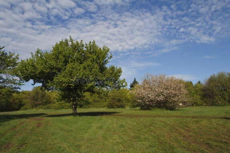 Download Зеленая пуща стоковое фото. изображение насчитывающей листья - 40579292