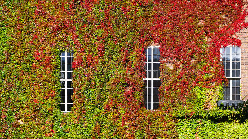 Зеленая стена горизонтальная на Cityhall стоковое изображение rf