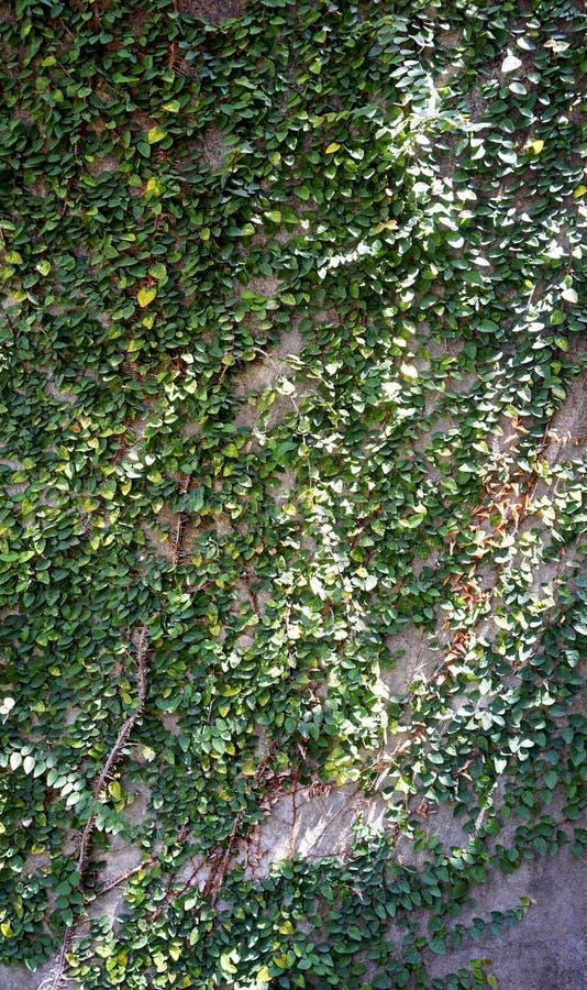 Зеленая стена на строя вертикали стоковая фотография rf