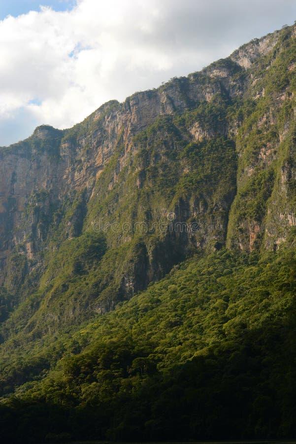 Зеленая сторона скалы стоковое фото rf