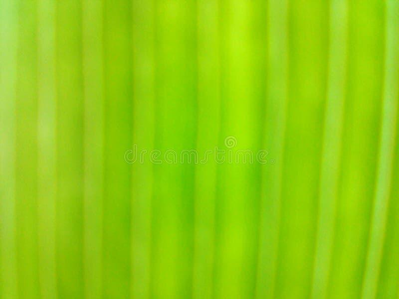 Зеленая текстура естественная стоковое изображение rf