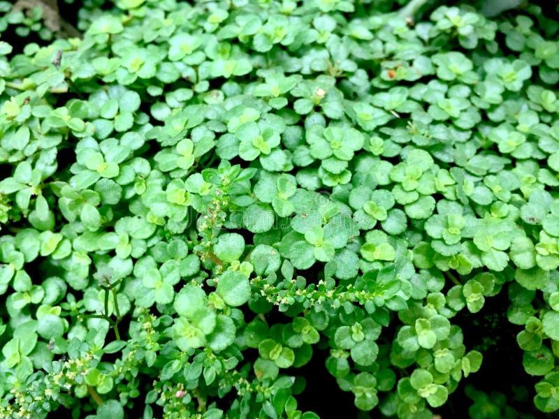 Зеленая текстура жизни стоковое изображение rf