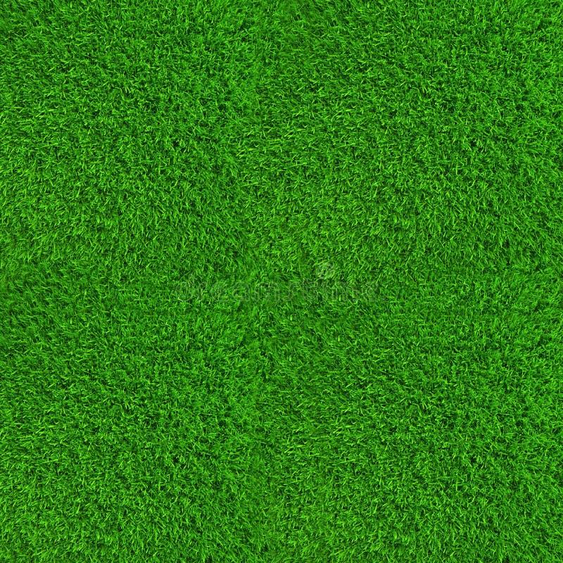 Зеленая текстура предпосылки травы лужайки высокая стоковое изображение rf
