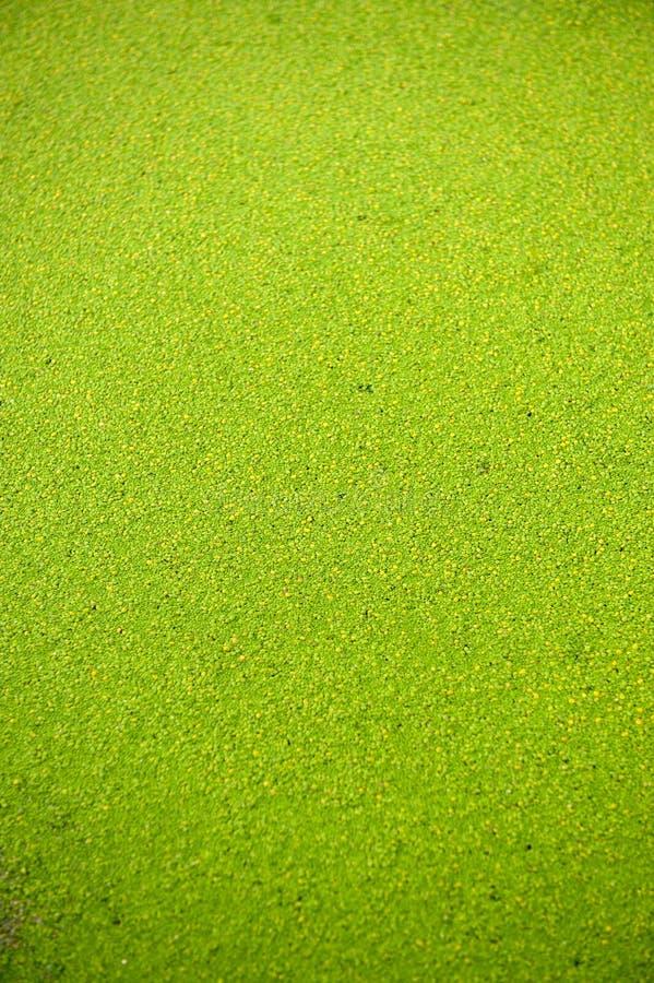 зеленая текстура стоковые изображения rf