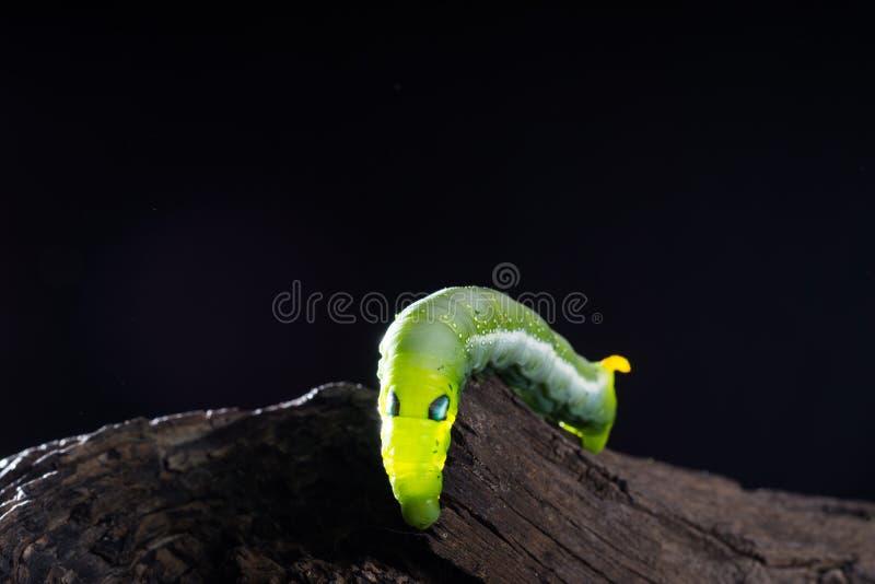 Зеленая теплая предпосылка темноты translucency стоковая фотография rf