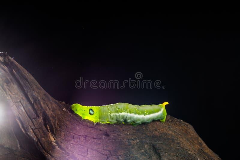 Зеленая теплая предпосылка темноты translucency стоковое изображение