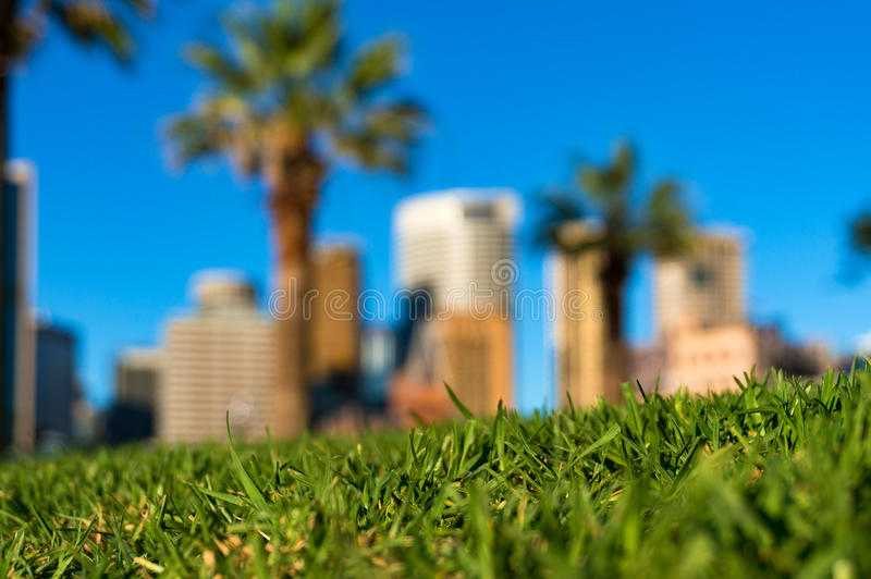 Зеленая трава и небоскребы Городская концепция природы стоковые изображения rf