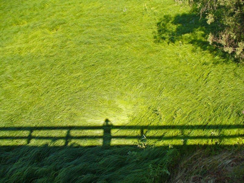 Зеленая трава и тень стоковые фотографии rf