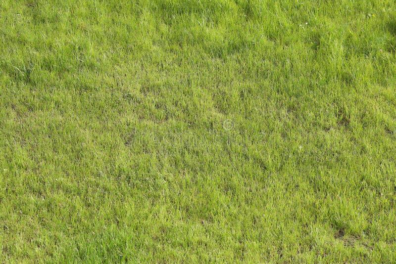 Зеленая трава на футбольном поле стоковое фото